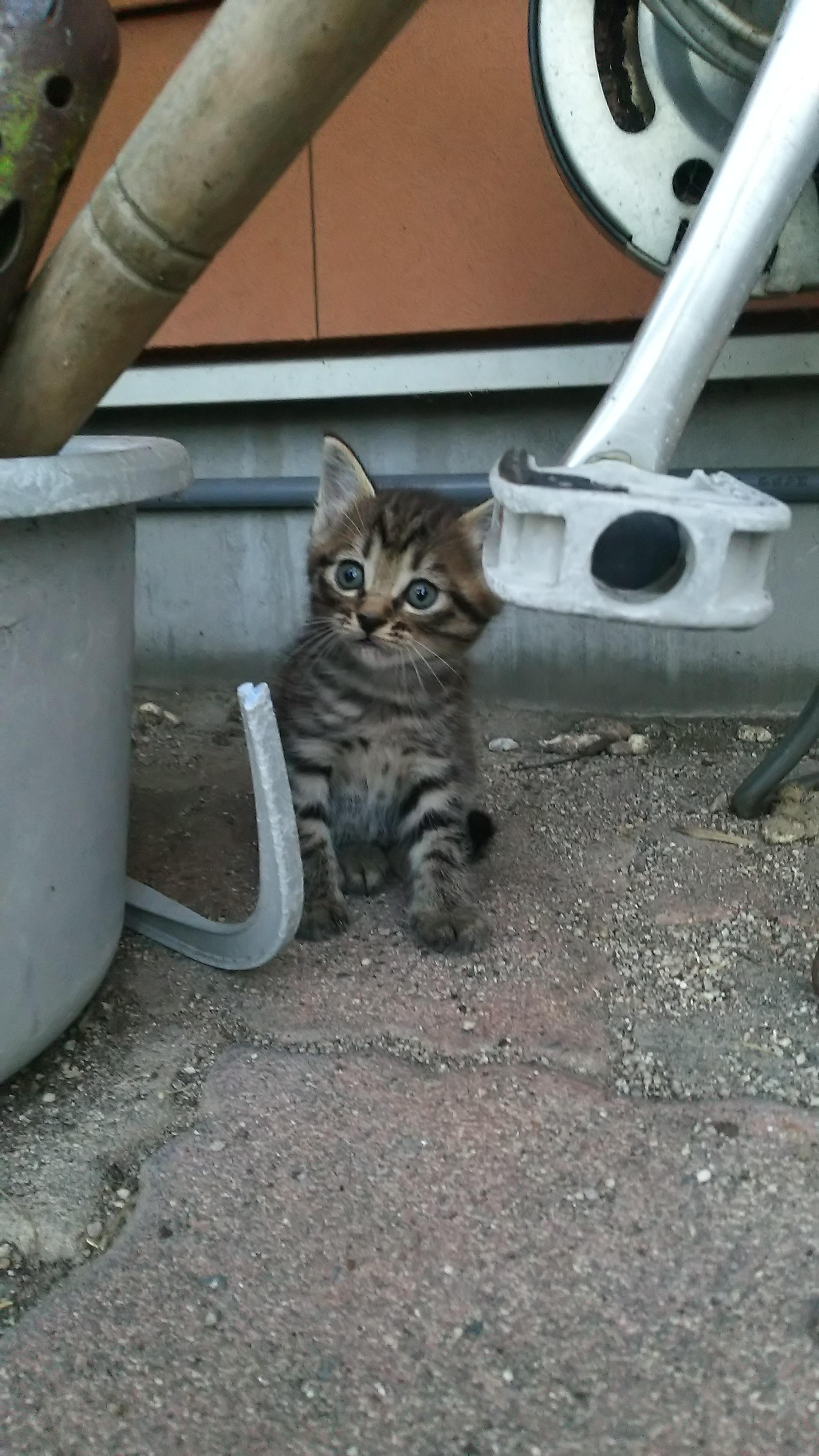 ボンネットに入った、子ネコ助ける!救出大作戦!!