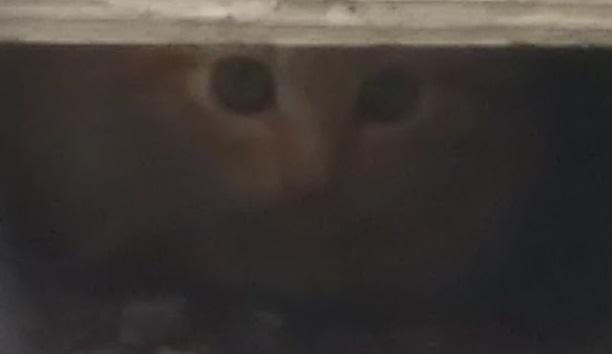 カリカリご飯を喋りながら食べる猫が来ました