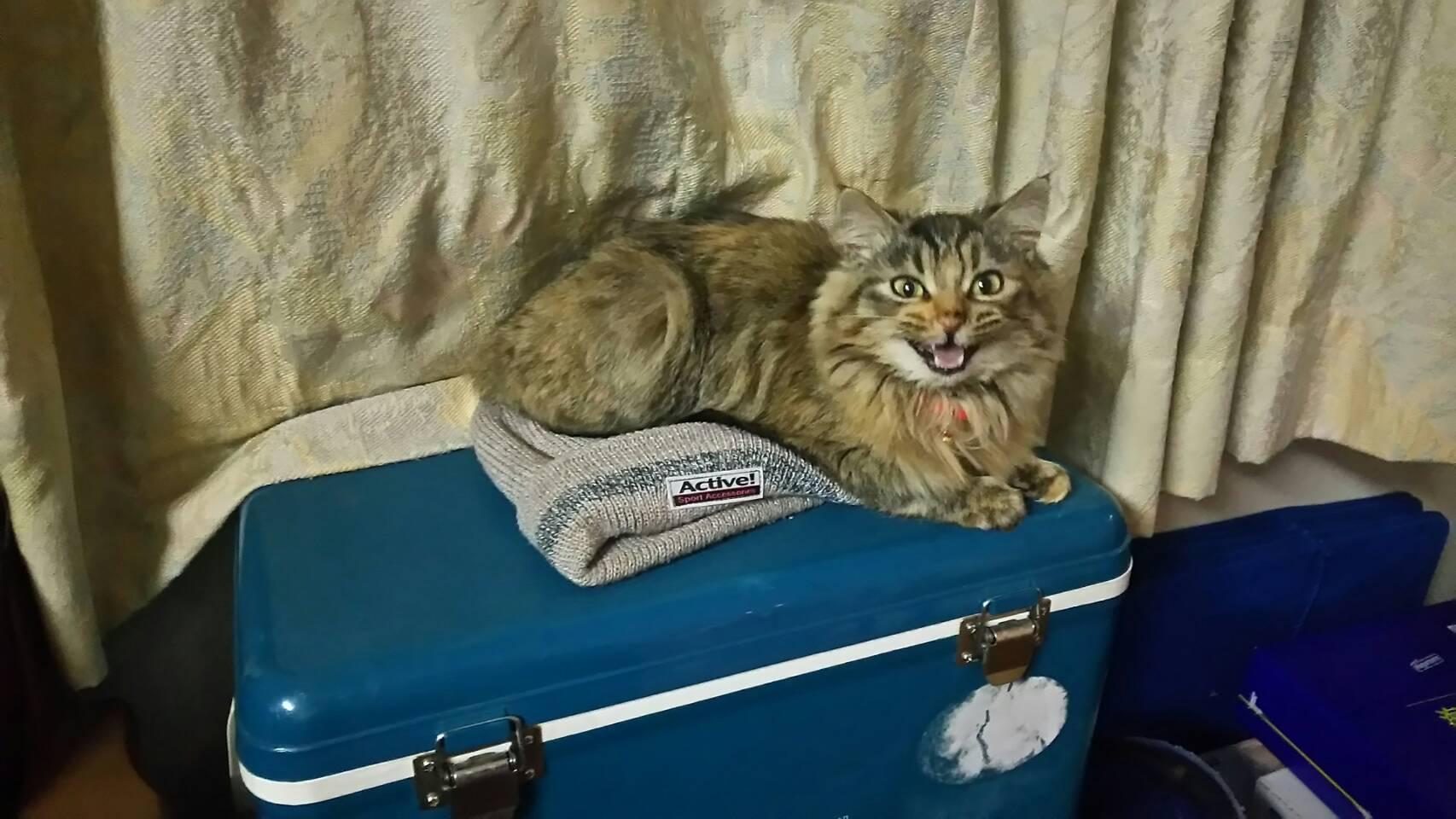今日の網ちゃん ~野良猫から足を洗って~