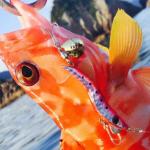 ブリーデンのメタルマルは狙う魚種を選ばない!アクションと使い方で釣果UP!