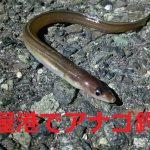 夜の名古屋港でアナゴ釣り コツさえ掴めば楽しめるし、仕掛けも簡単なエサ釣り!
