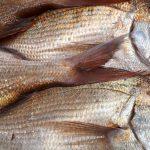 鯛(タイ)の旬は春から初夏 美味しい食べ方、新鮮な魚の選び方、仲間をご紹介!