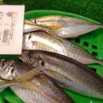 魚のアジの美味しい食べ方や買うときの目利きの方法。旬の時期や種類をご紹介。
