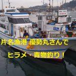片名漁港の優勢丸さんでイワシの泳がせ釣りでヒラメと青物を狙いに行ってきた!